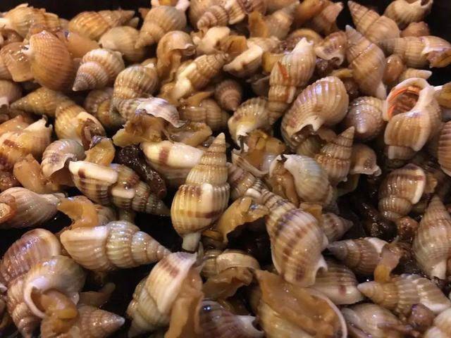1001 thắc mắc: Loài ốc nào có cú vồ nhanh bậc nhất thế giới động vật? - Ảnh 2.