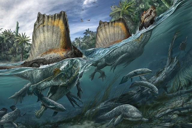 Top 5 điều thú vị xoay quanh Spinosaurus - kẻ săn mồi đáng sợ ngang cơ cả T-REX - Ảnh 3.