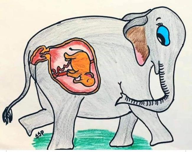Ấn Độ: Voi mang thai nổ hàm, chết tức tưởi vì bị dân làng lừa cho ăn trái dứa nhồi pháo khiến cả thế giới sục sôi phẫn nộ - Ảnh 5.