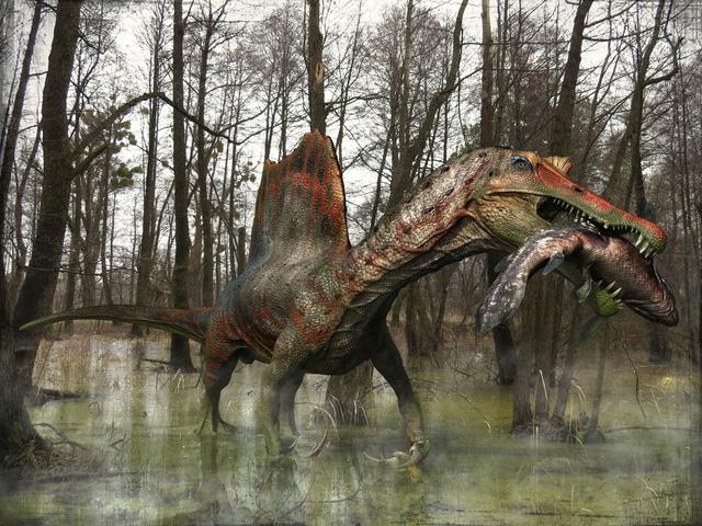 Top 5 điều thú vị xoay quanh Spinosaurus - kẻ săn mồi đáng sợ ngang cơ cả T-REX - Ảnh 4.