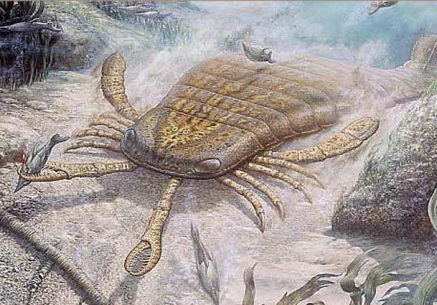 Những sinh vật siêu to khổng lồ từng tồn tại trên Trái Đất từ trước tới nay - Ảnh 5.