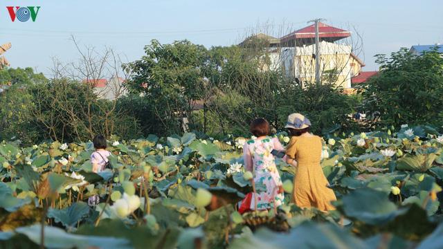 Đầm sen trắng hiếm có, giúp chủ đầm thu tiền triệu mỗi ngày ở Hà Nội - Ảnh 5.