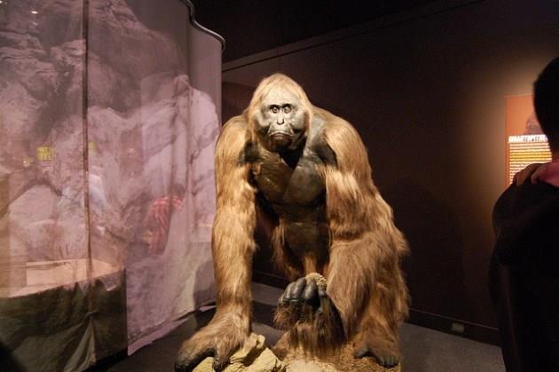 Những sinh vật siêu to khổng lồ từng tồn tại trên Trái Đất từ trước tới nay - Ảnh 6.