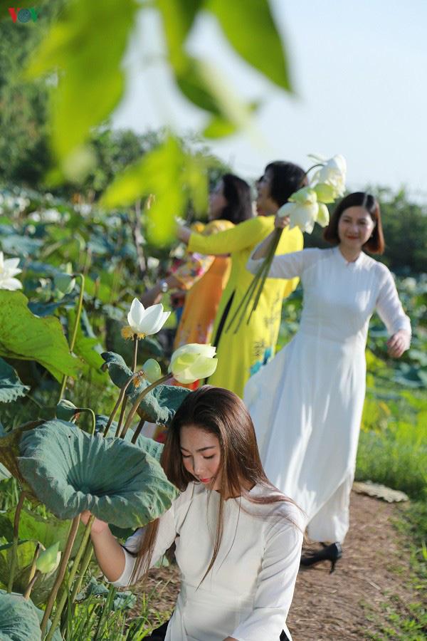 Đầm sen trắng hiếm có, giúp chủ đầm thu tiền triệu mỗi ngày ở Hà Nội - Ảnh 7.