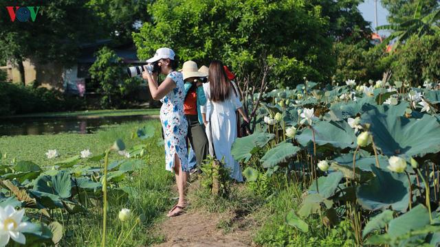 Đầm sen trắng hiếm có, giúp chủ đầm thu tiền triệu mỗi ngày ở Hà Nội - Ảnh 8.