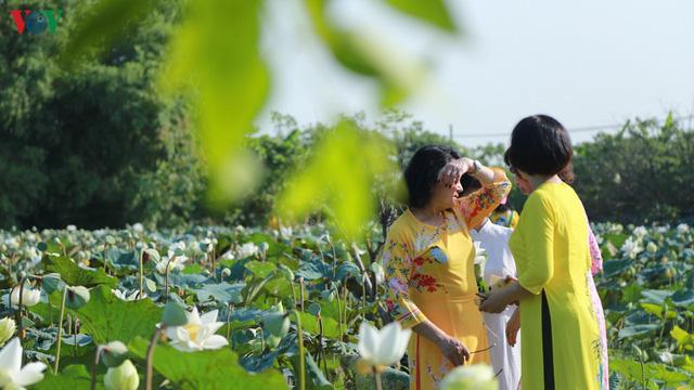 Đầm sen trắng hiếm có, giúp chủ đầm thu tiền triệu mỗi ngày ở Hà Nội - Ảnh 9.