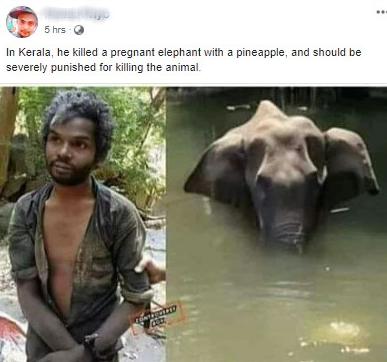 Sự thật về người đàn ông bị nghi là thủ phạm cho voi mẹ ăn trái dứa có thuốc nổ để rồi chết đứng trên sông - Ảnh 2.