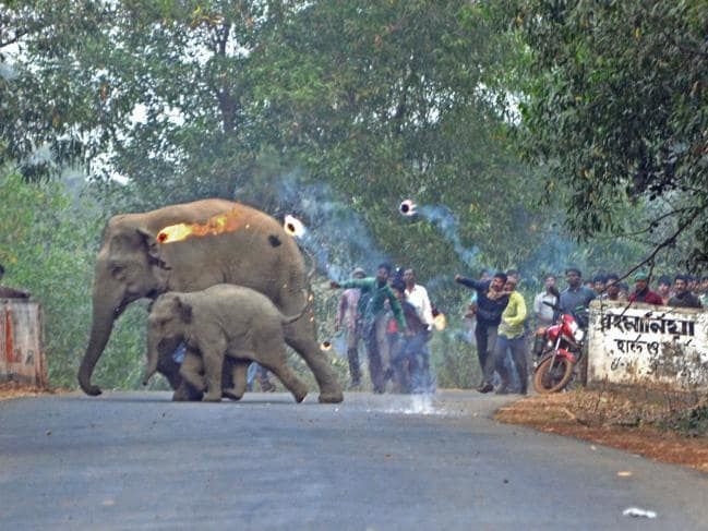 Thêm hình ảnh gây phẫn nộ tột cùng: Mẹ con nhà voi vào làng xin ăn, bị dân ném cầu lửa và đá xua đuổi không thương tiếc - Ảnh 3.