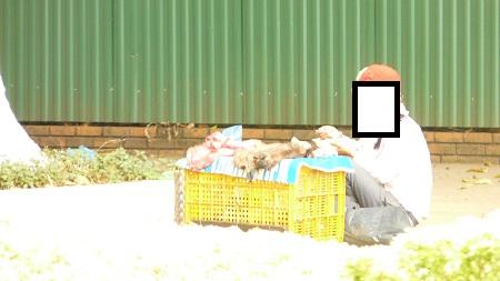 Điểm bán thịt khác trên đường Lê Duẩn cũng được quảng cáo là thịt heo rừng.