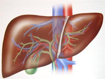 7 dấu hiệu nhận biết gan không khỏe mạnh 1