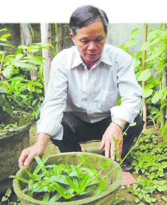 Bí ẩn cây thuốc lạ chữa khỏi bệnh đau dạ dày chỉ trong 1-2 tuần