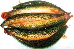 Muốn hết bất lực, liệt dương, yếu sinh lý chỉ cần ăn 3 món cá này
