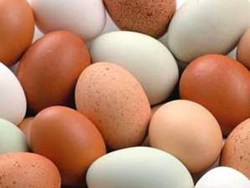 Những người tuyệt đối không được ăn trứng gà, vịt.