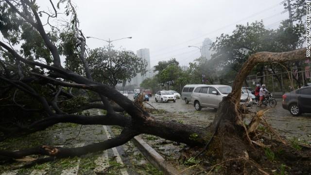 Bão Rammasun  gây ra gió lớn làm đổ cây ở Manila.