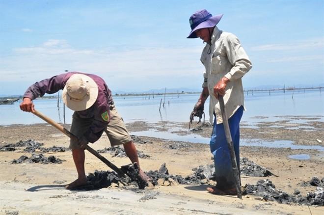 Đào giun biển, để lại hố trên bãi bồi, ảnh hưởng đến nuôi trồng thủy sản.