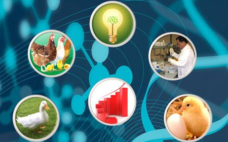 CP Việt Nam có 9 nhà máy sản xuất thức ăn chăn nuôi và thủy sản.