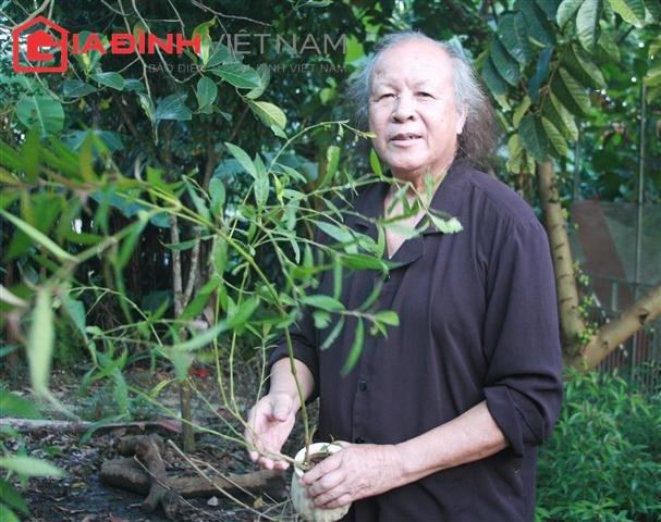 Ông Nguyễn Hữu Trọng: Tôi uống cây thuốc này hàng ngày (Ảnh: Xuân Hải)