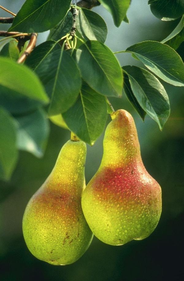 9 loại rau củ có nguy cơ ngấm nhiều hóa chất nhất 8