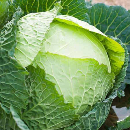 Những bệnh không ngờ phải kiêng bắp cải