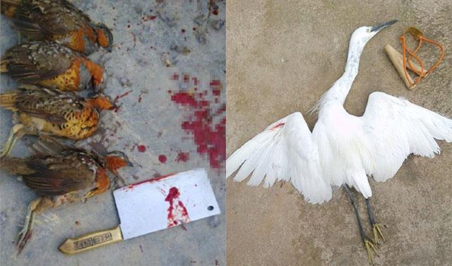 Xác chết của các chú chim bị khoe lên mạng xã hội Weibo