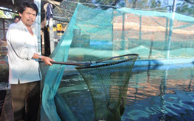 Mô hình nuôi cá lóc trong bể lót bạt. Ảnh: Dũ Tuấn/Dân việt