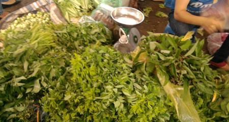 Rất khó phân biệt đâu là rau sạch, rau nhiễm thuốc bảo vệ thực vật.