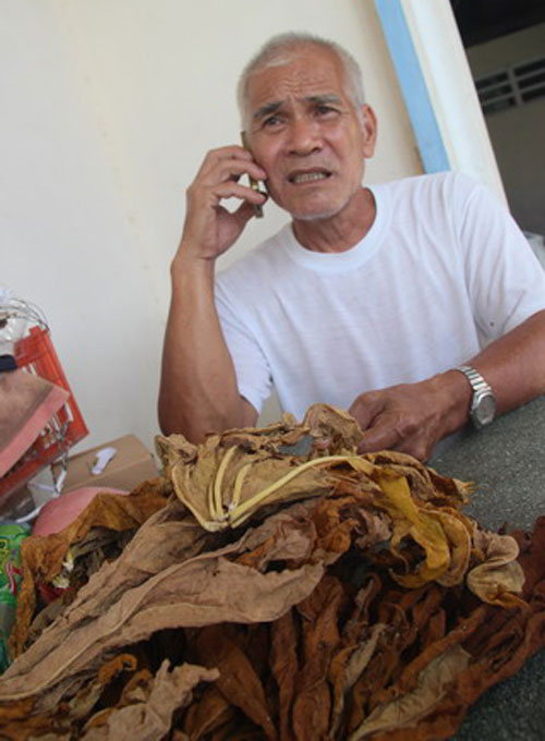 Ông Ngô Ngọc Chạy (Chín Chạy) và mớ lá đu đủ khô. Ông thường xuyên trả lời các cuộc gọi đến tham vấn cách chữa bệnh.