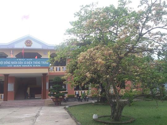Cây mai trắng trước UBND xã Điện Thắng Trung đang bung hoa khoe sắc