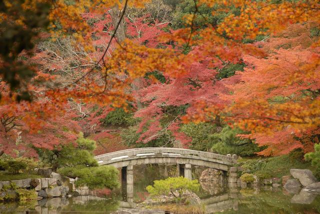 Mùa thu ở cố đô Kyoto đẹp đến nao lòng. Ảnh: InsideKyoto