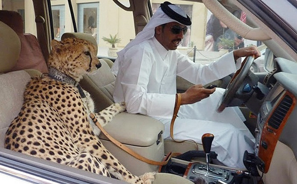 Thú cưng của người Dubai thật sự đáng yêu muốn chết luôn!