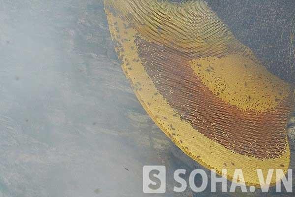 Tổ ong khoái ở đại ngàn Lâm Bình