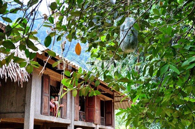 Các dây bí khổng lồleo cây bóng mát thả quả xuống bên mái nhà sàn người Mường nhìn rấtđẹp mắt.
