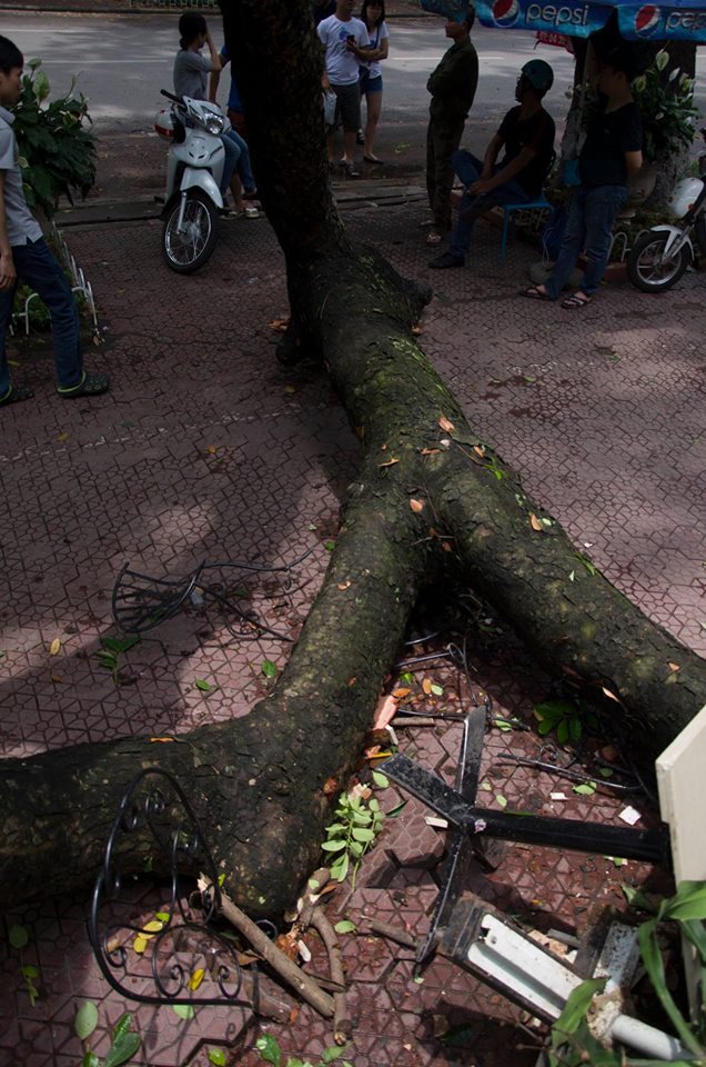 Nơi cành cây đổ xuống được đặt nhiều bàn ghế cho khách ngồi ăn sáng, uống cà phê,....