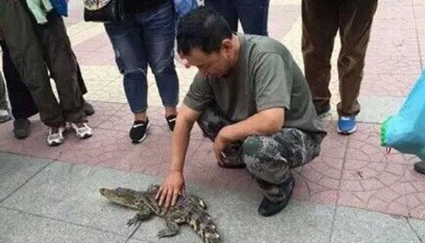 Một người đàn ông Trung Quốc trở thành tâm điểm chú ý khi bị bắt gặp đang dắt con cá sấu cưng đi dạo giữa đường phố.
