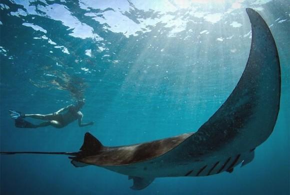 top 10 động vật thời tiền sử quái ác nhất dưới biển 0