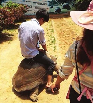 Một hình ảnh du khách cưỡi rùa quý gây phẫn nộ.