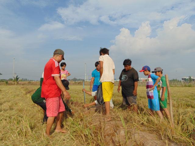 Săn chuột trên những cánh đồng lúa chín luôn là thú vui thu hút nhiều thanh thiếu niên nhiệt tình tham gia.