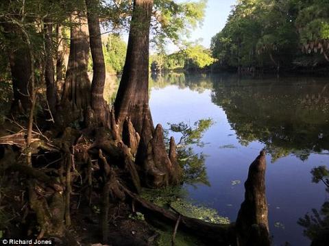 Một bức ảnh khác về con sông Oklawaha được ông Jones chia sẻ với Daily Mail.