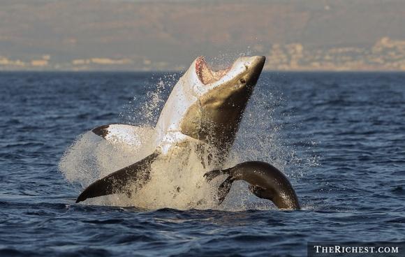 người và cá mập 5