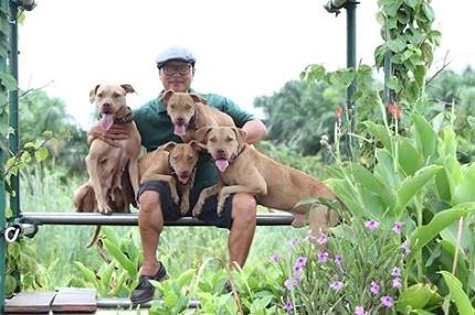 Là người mang chó Pit Bull về Việt Nam đầu tiên, hiện anh Tuấn đang sở hữu cả một trang trại chó Pit Bull