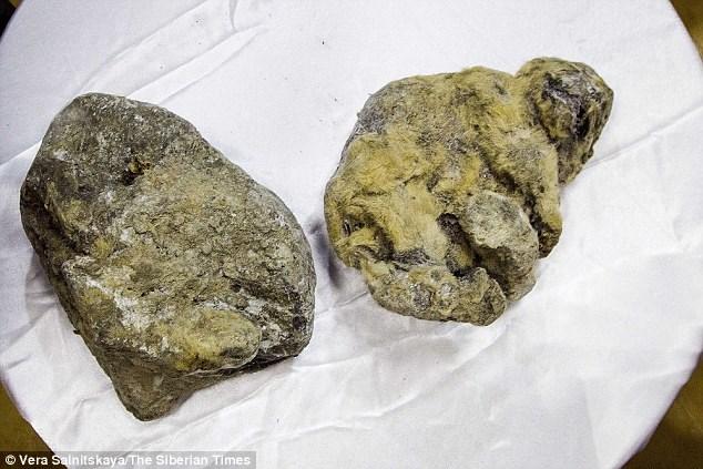 Hình ảnh hai xác ướp sư tử hang