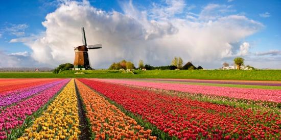 Nga là khách hàng nhập khẩu số lượng lớn các mặt hàng hoa từ Hà Lan.