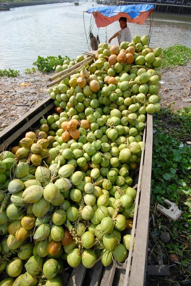 Dù giá tại nhà vườn giảm mạnh nhưng tại hầu hết các quán cà phê, nước giải khát ở Tp.HCM, giá dừa đã bị đội lên gấp cả chục lần. Giá dừa tươi ướp lạnh 15.000-20.000 đồng/trái, có nơi còn bán ở mức 25.000-30.000 đồng. (Ảnh: Ngọc Trinh)
