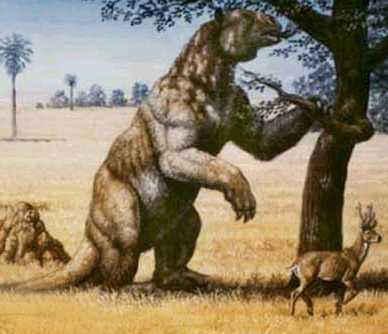 Loài lười Megalonyx jeffersoni có chiều cao 7 mét và nặng tới 7 tấn