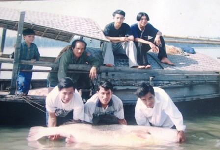 Tiến sĩ Nguyễn Đức Cự, người có nhiều năm nghiên cứu để ra đời đề tài khoa học về loài cá quý hiếm này thông tin trên VOV Giao thông: Đây là loài cá có giá trị kinh tế đặc biệt cao, giá trị thương mại trước năm 2005 tại Việt Nam dao động trong khoảng 5- 7 triệu đồng /kg (300 - 400USD/kg) và năm 2007 khoảng 15 – 20 triệu đồng/kg. (Ảnh: Ngư dân Hà Tĩnh bắt được cá sủ vàng/Vietnamnet)