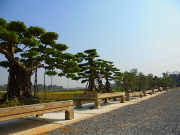 Khu vườn mới được mở rộng quy mô của một đại gia cây cảnh tại Thạch Thất - Hà Nội.