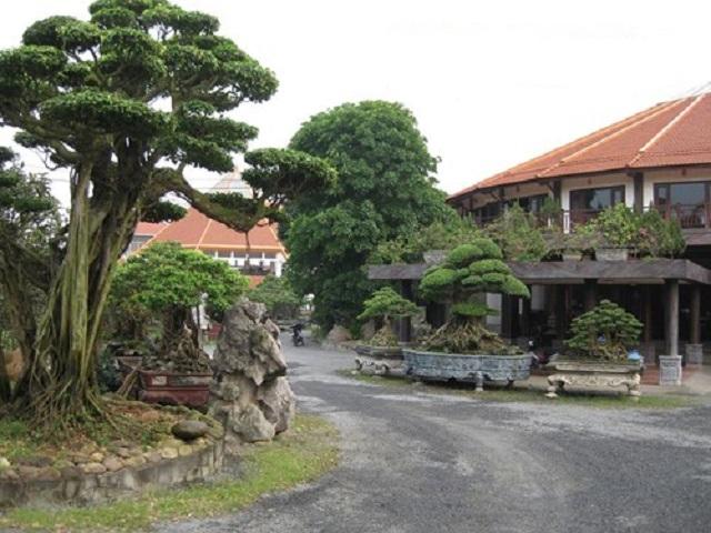 Khu vườn của đại gia Phiến cá với nhiều loại cây đẹp cũng như đắt tiền nhất Việt Nam.