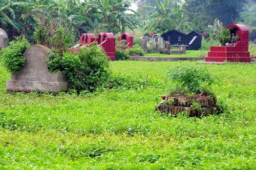 Những ngôi mộ được bao bọc bởi những ruộng rau muống xanh mơn mởn.