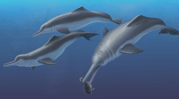 Phác họa ngoại hình của tổ tiên mới cá heo