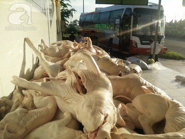 Các đầu nậu tinh vi dùng xe khách để tuần thịt bẩn vào Sài Gòn tiêu thụ.